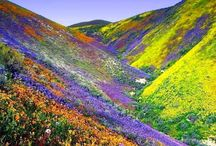 Desierto florido chileno