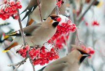 Oiseaux de France et d'ailleurs / oiseaux de chez moi, et du monde les plus beaux