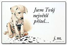 pratelstvi / krásné obrázky