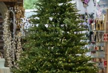 Christmas Trees / A selection of Christmas Trees from www.hayesgardenworld.co.uk