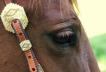 Horses & Animals / by Sheri Steiner