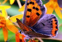 Butterflies & Moths & insects & frogs / by Joan Deysel
