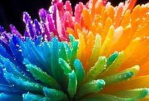 I colori della vita #love