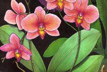 Orquídeastiana 1
