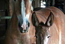 Søte hestebilder