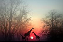 Some of God's creation / by Maci Klawetter