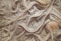 Fossiliferous