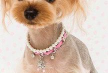 Yorkies hairstyle and clothes