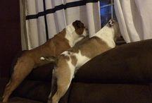 sjove hunde