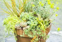 Garden ideas / by Becky Moran