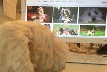 Welthundetag 2016 - Bürohund-Edition