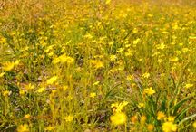 Tranquil Western Australia / Traveling Western Autralia