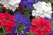Red White & Blue Flowers / Decorating with red white & blue flowers