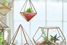 Terrarium & Terrarium Accessories