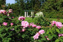 Vrtnice / Roses Arboretum Volčji Potok / Vrtnice v Arboretumu