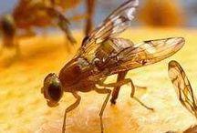 Fruit Fly / by Karen Mello
