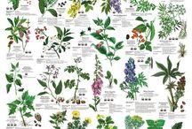 Pflanzen und Co