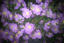 flowers+garden