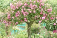 Green and Pink Garden