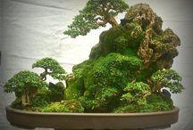 Bosques Bonsai