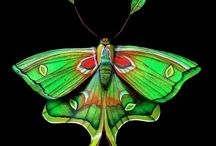 Beautiful Moths / by LMRCreations-Lynne