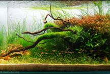 aquascaping / this is an amazing art that i will be starting someday.