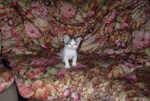 Zeus Marino Gatto / Foto del micio trovatello entrato di diritto in casa Marino, il 01-08-09,