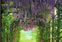 Smukke steder i haven..
