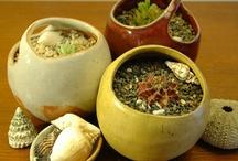 plant pinch pots
