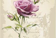 Роузы