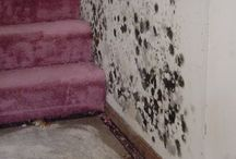 Mold Remediation / ServiceMaster of Kalamazoo has wonderful insight about mold you will want to know. Not all black mold is the infamous bad mold, and it's good to recognize when it is time to call a professional to help you take care of your mold situation.