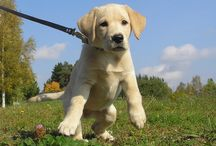 Dog Training / basics of house training with a list of do's and don'ts.