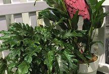 Pot plants for hire