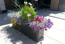 Planter Creations