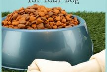 Helpful Tips for Pet Parents / Helpful tips and hacks for pet parents.