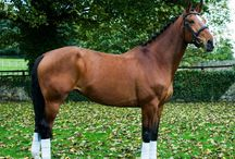 Oakwood Park / equus sims inspo...?