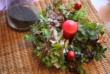SO-CUTE adorabilmente grasse / creazioni con piante succulente - succulent creations