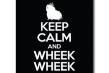 *wheekwheek