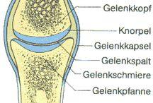 Gelenke Joints / Gesunde Gelenke - Bewegung, Ernährung, Pflege, Produkte, Tipps