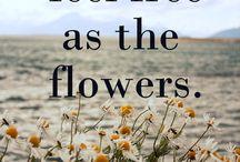 Blommen, bloemen / Hier word ik fleurig van :-)