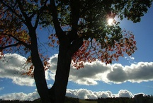 Explore: Sunshine and Blue Skies / by Robin