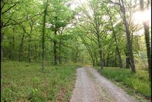 ADK TRAILS AND LANDSCAPING IDEAS