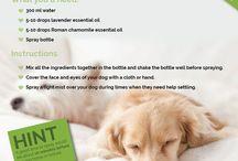 Dog · Hygiene & Care 1