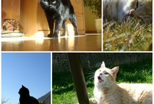 My Cats <3