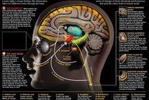Hjernen og stress