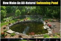 making a natural swimming pond