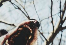 Werewolf (aesthetic)