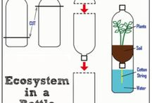 Ecosysteem in fles