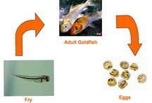 Cycle of reptiles