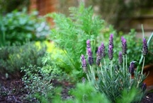 Gardening / by Lisa Buehnerkemper
